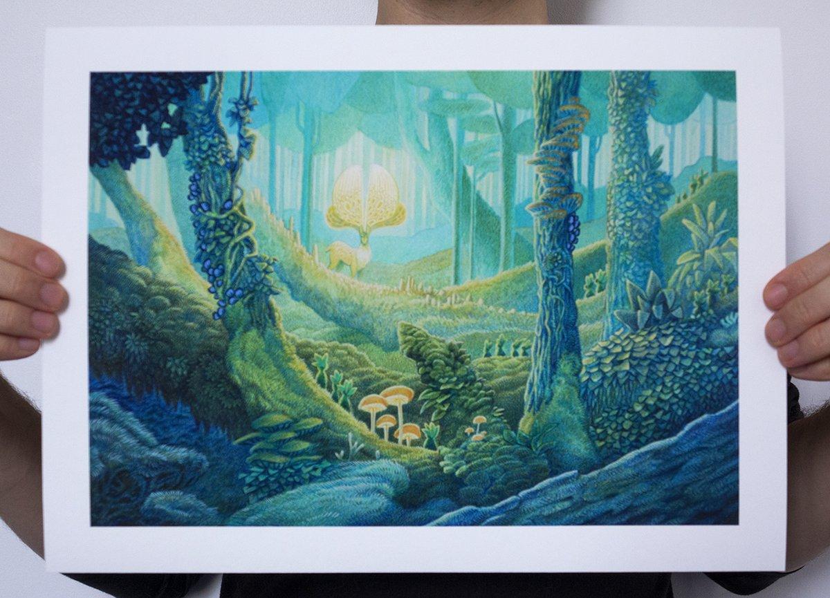 Image of La forêt millénaire / The millenial forest