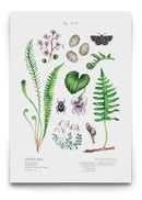 Image of [Forest Meadow Poster Pack] - Forest meadow + Forest brook