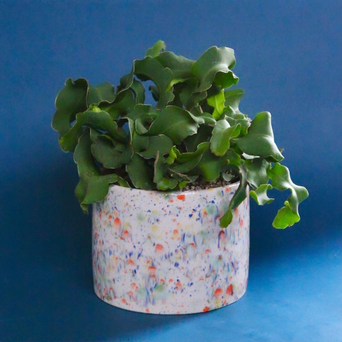 Image of Fruity pebbles planter