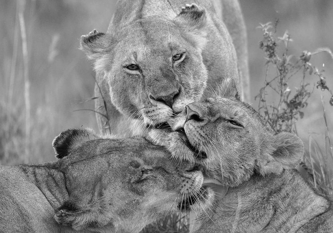 Image of Fotografía: familia