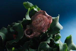 Image of Cuttlefish pipe