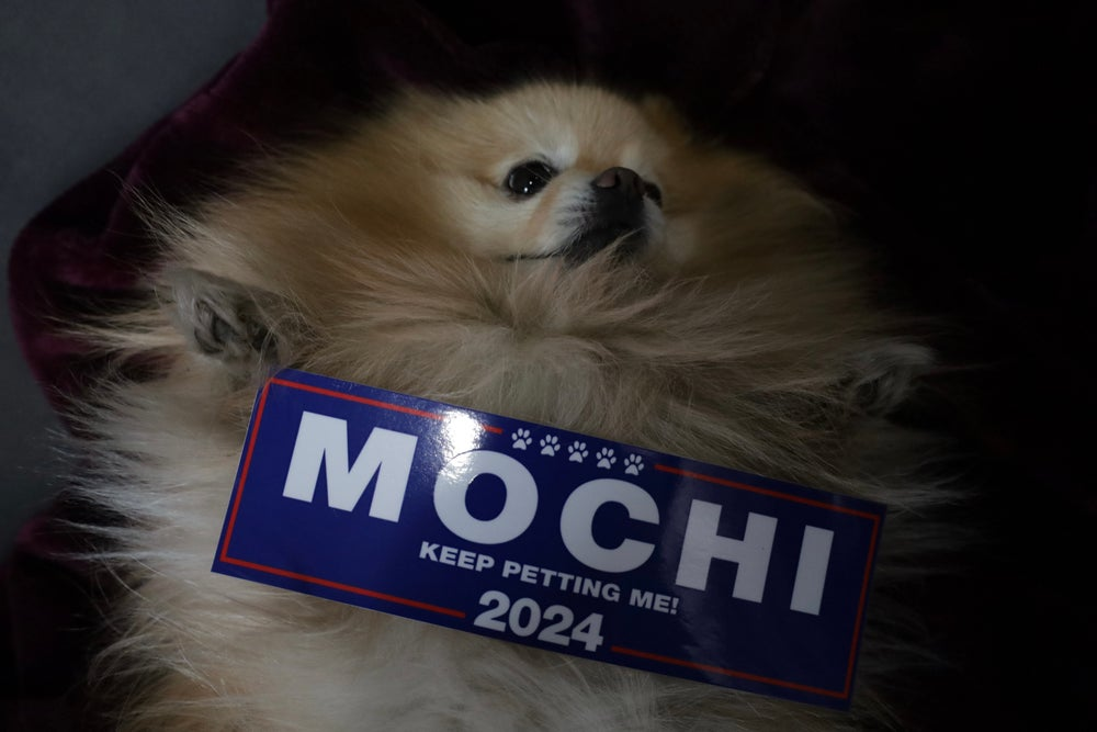 Image of Mochi For President