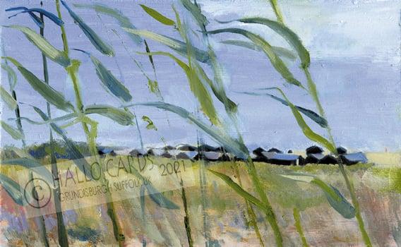 Image of Beach Huts through the Reeds - Walberswick - Suffolk