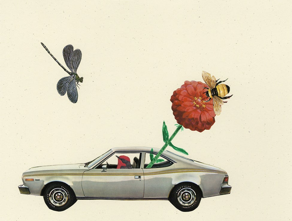 Image of A vermillion flycatcher buzzes along in his new hornet hatchback. Original collage.