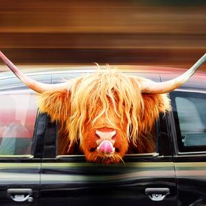 Image of Highland Cow Art -  London