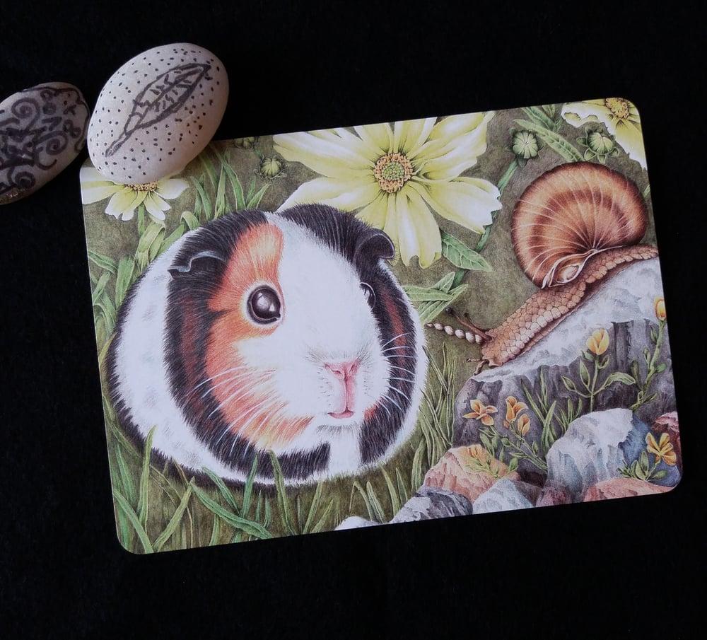Image of Curious Guinea Pig - Postcard