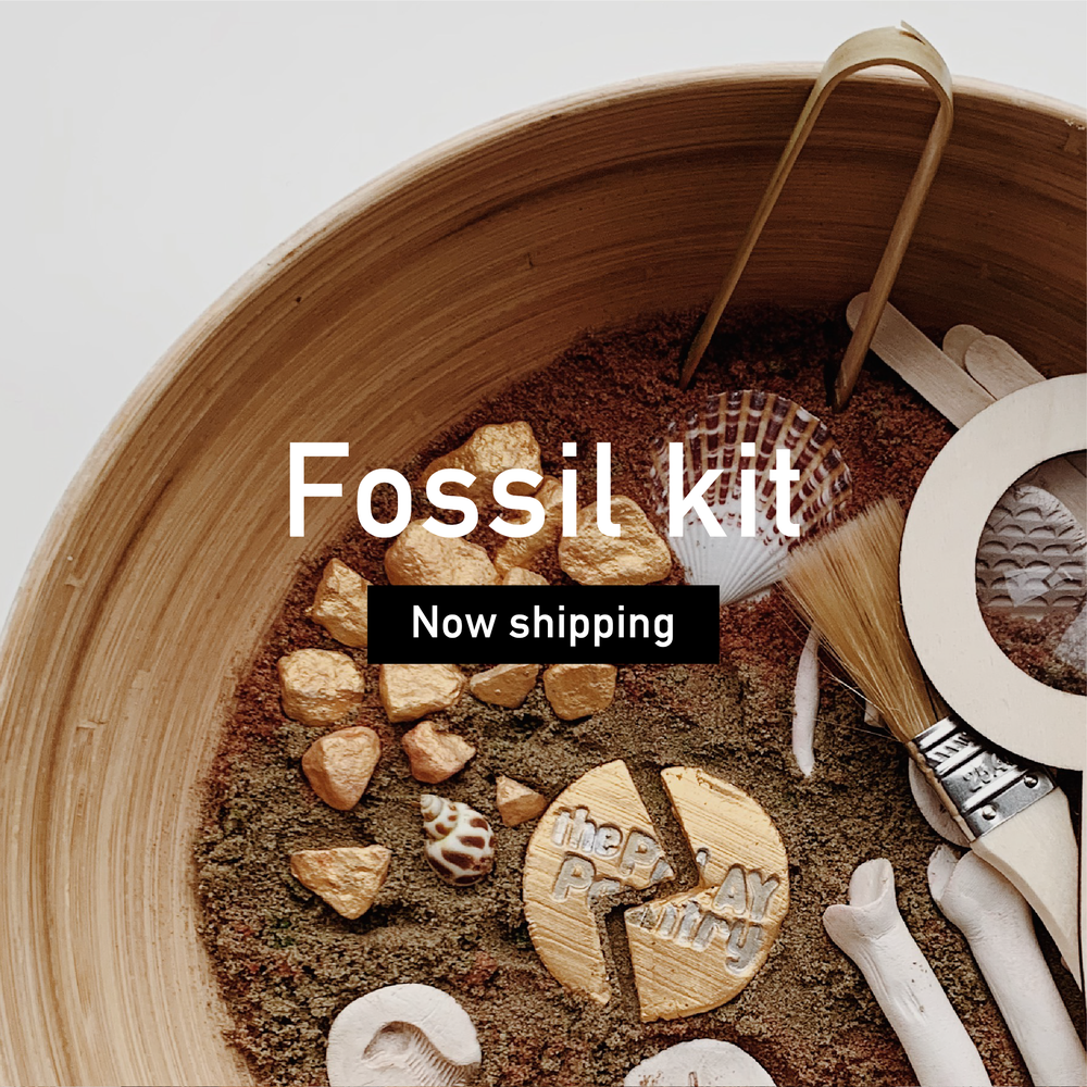 Image of Fossil kit