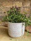 Herb jar