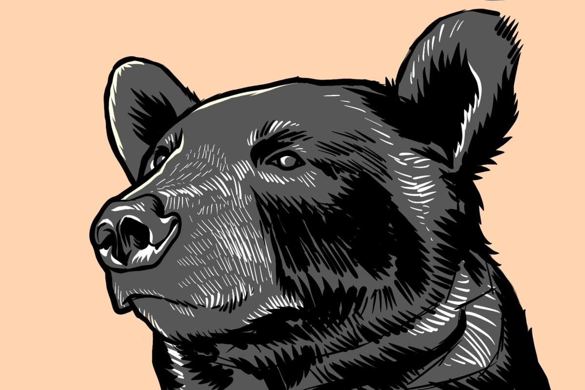 "Image of Black Bear Linocut - 5 x 7"""