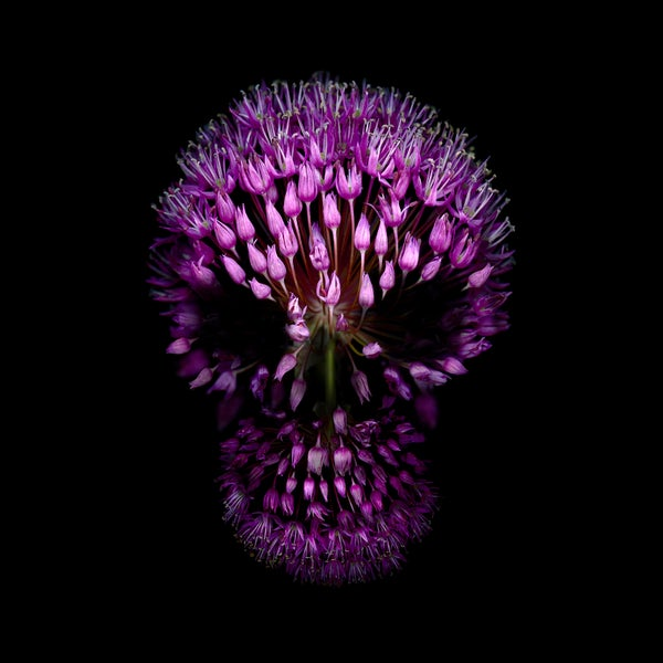 Image of Purple Flower Skull - Giclée
