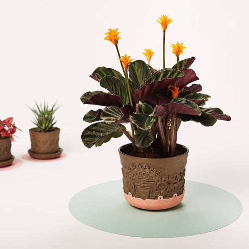 Image of manoa flower pot L