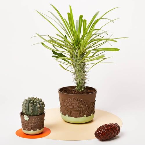 Image of manoa flower pot S