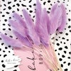 Lilac Bunny Tails - Dried Flowers