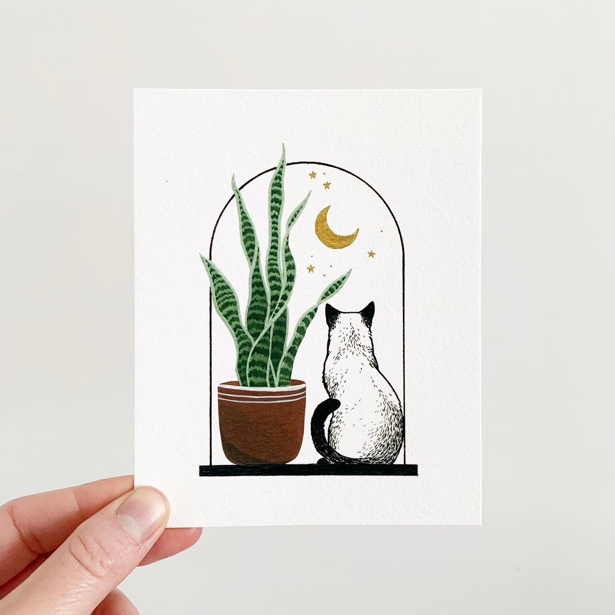 Image of Cats + Plants: Snake Plant