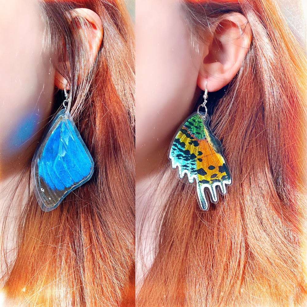 Image of REAL Butterfly Wing Earrings | Cruelty Free
