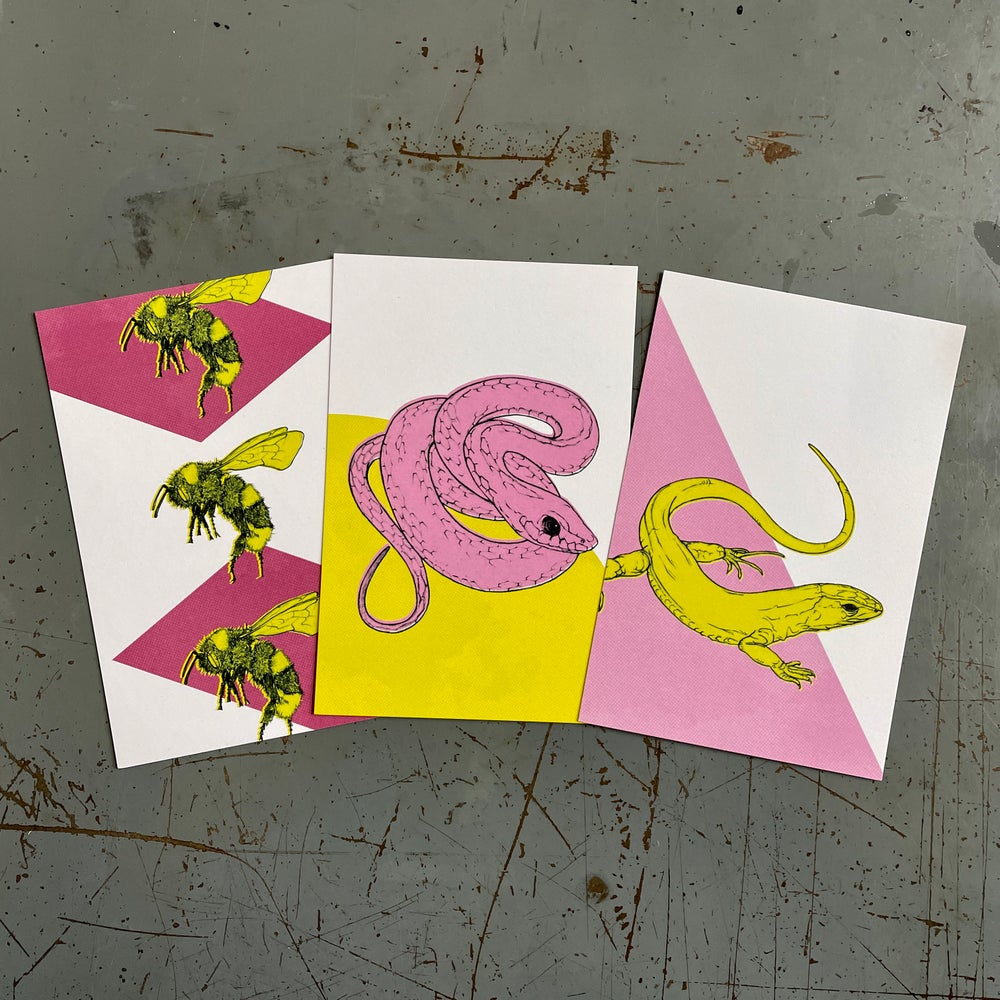 Postcard Set • Creatures & Features of the American West