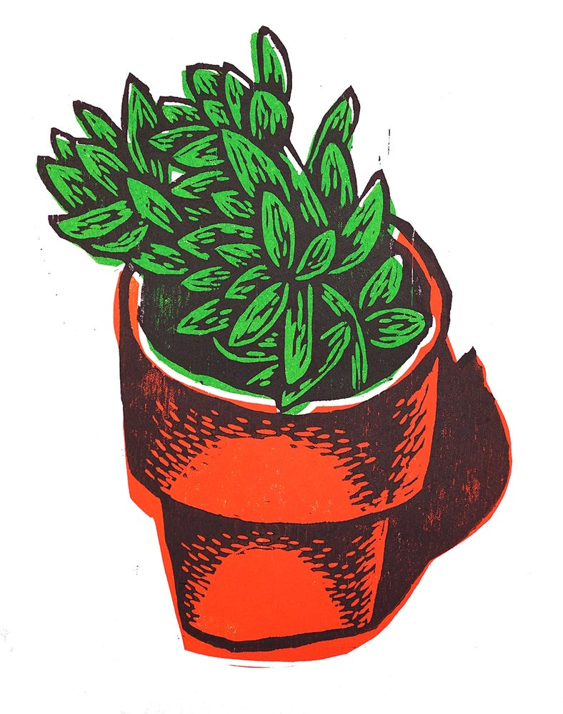 Image of Houseplant