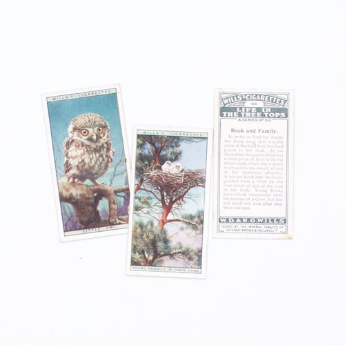 Image of Life in the Tree Tops Cigarette Cards - Set of 8