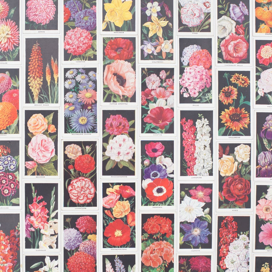 Image of Amateur Gardening Cigarette Cards - Set of 8
