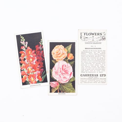 Image of Amateur Gardening Cigarette Cards - Set of 8