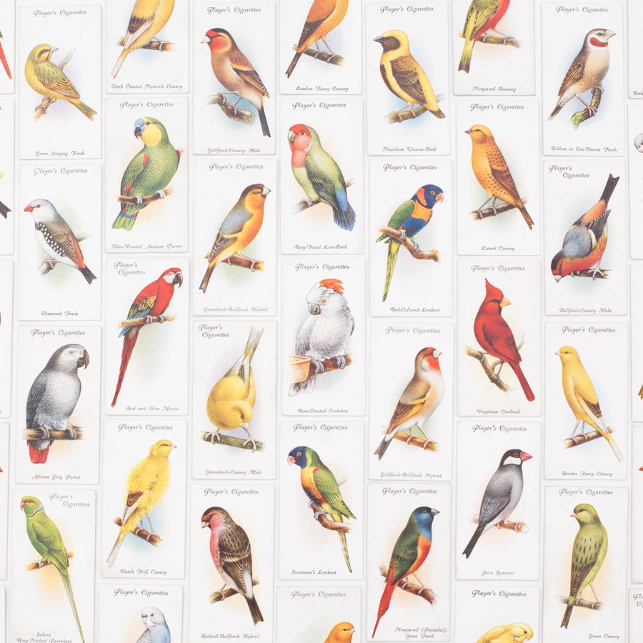 Image of Aviary and Cage Birds Cigarette Cards - Set of 8