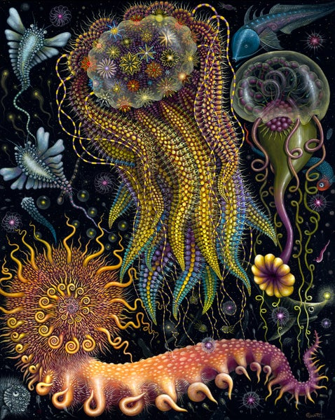 Image of The HYDROZOA /DEVOURING STARJELLY COLLECTION • Both sold together!