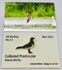 March 2021 UK Birding Pin Releases