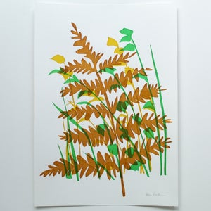 Image of Fern A3