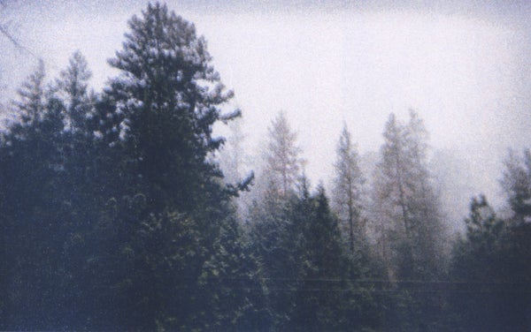 Image of Trinity