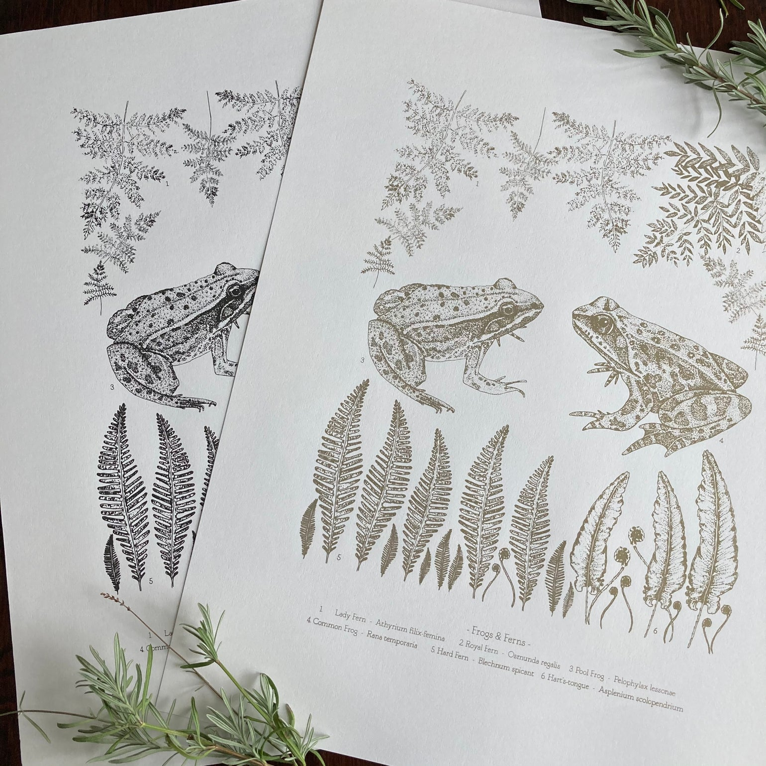 Image of Frogs and Ferns - silk screen print