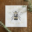 Image 1 of White tailed bumble bee