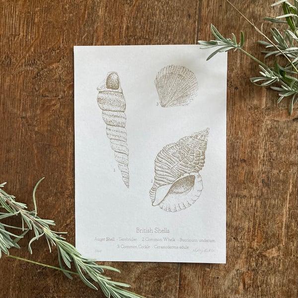 Image of British Shells - silk screen print