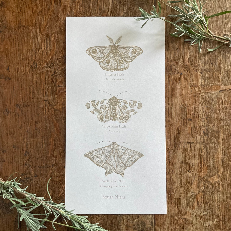 Image of British Moths - silk screen print