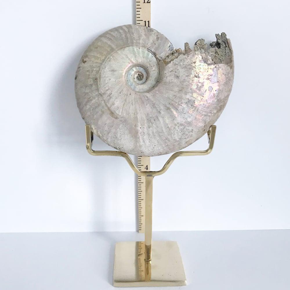 Image of Iridescent Rainbow Ammonite No.51 + Brass Arc Stand