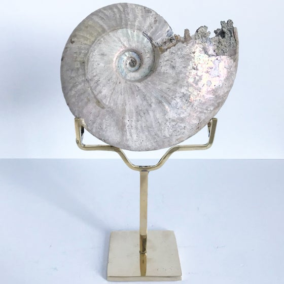 Image of Iridescent Rainbow Ammonite No.51 + Brass Arc Stand