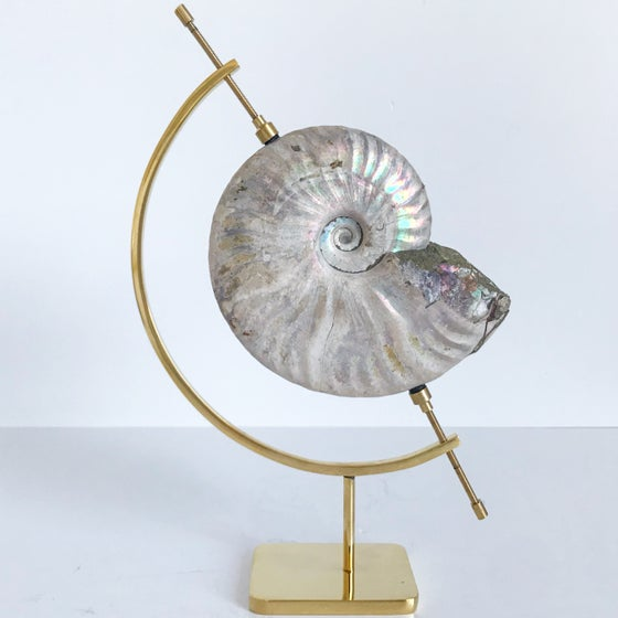 Image of Iridescent Rainbow Ammonite No.25 + Brass Arc Stand