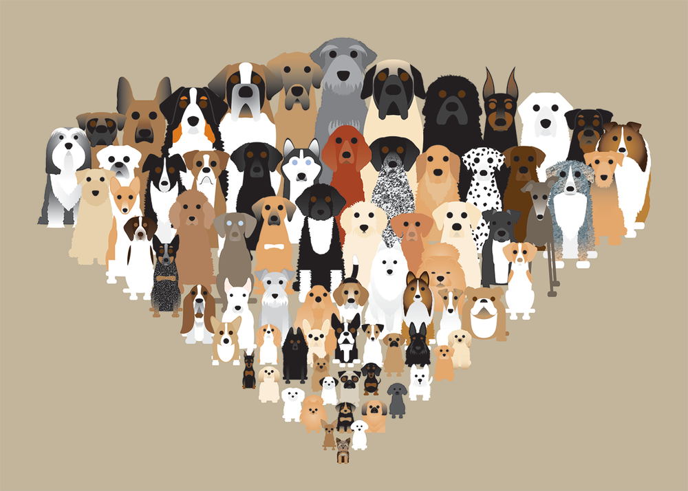 Multi Dogs Collection