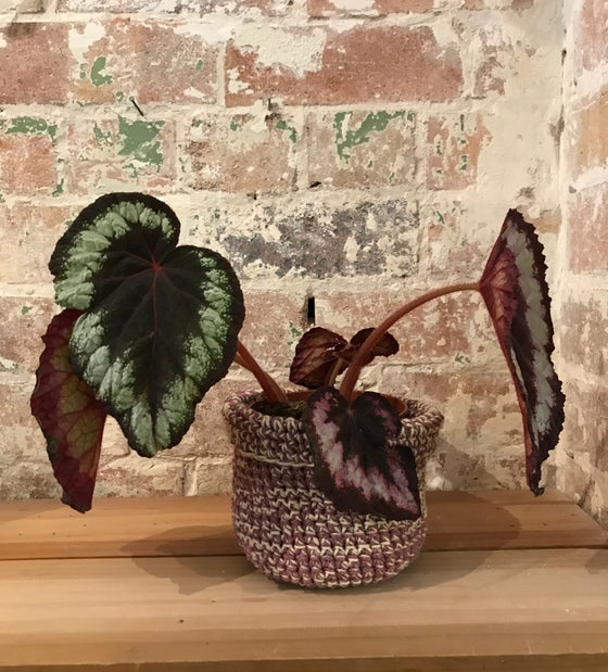 Image of Crochet Little Pot Plant holders  with Avalon.. Sunday morning March28 10-12noon(advanced beginner)