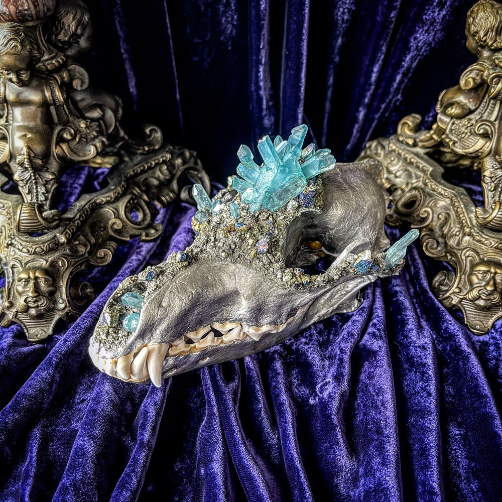 Image of Light blue Aura Quartz - Coyote Skull