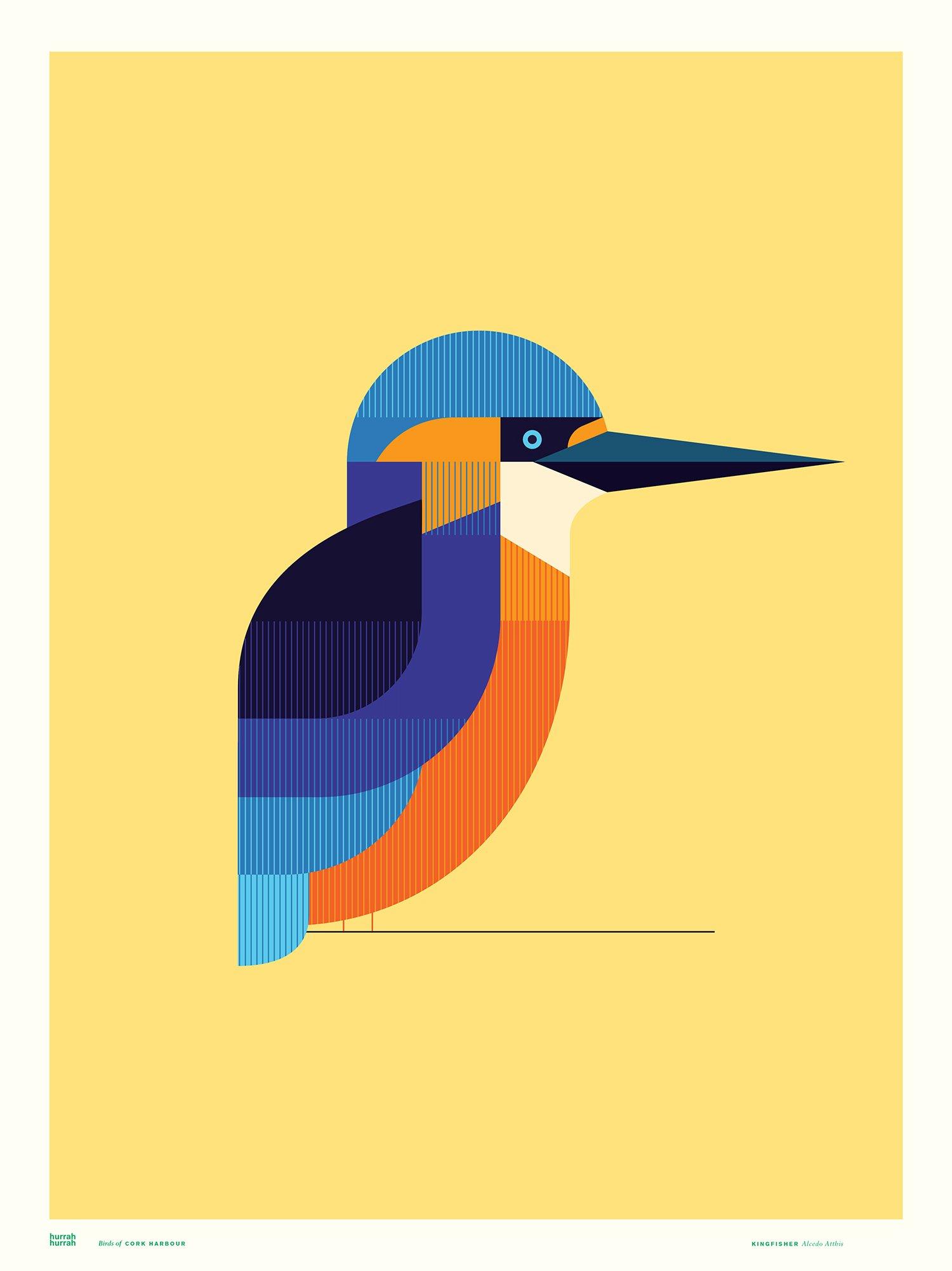 Kingfisher / Cork Harbour Birds