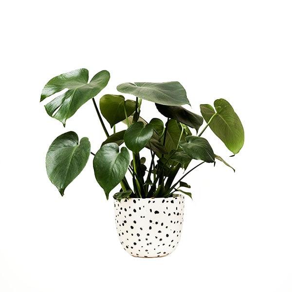 Image of Finca Planter