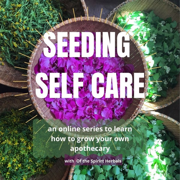 Image of SEEDING SELF CARE Online Series