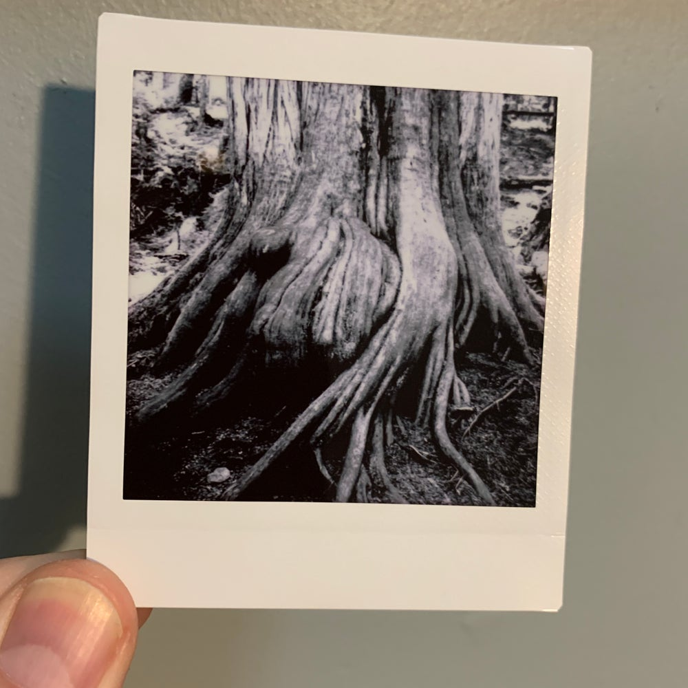 Image of Ancient Roots, mini print