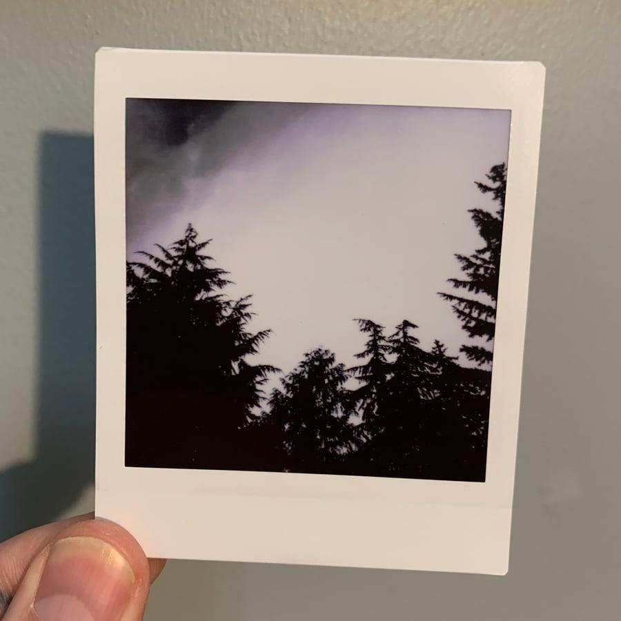 Image of Tree Tops, mini print