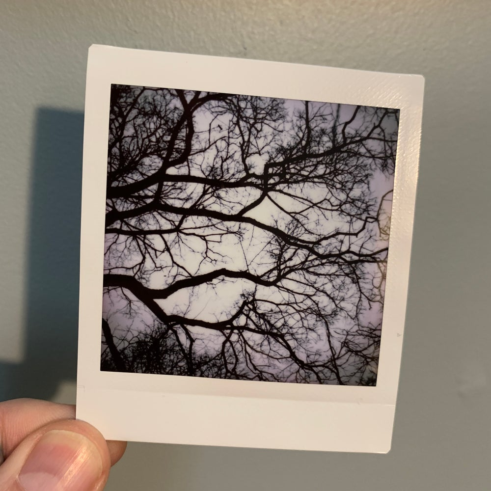 Image of Branches, mini print