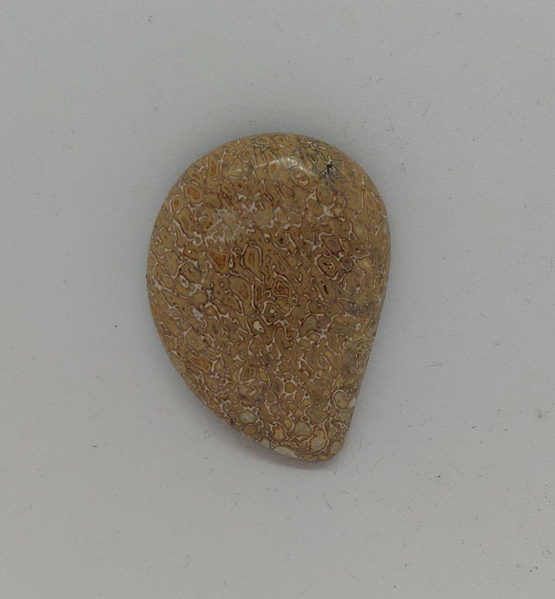Image of Fossilized Dinosaur Bone #21-463