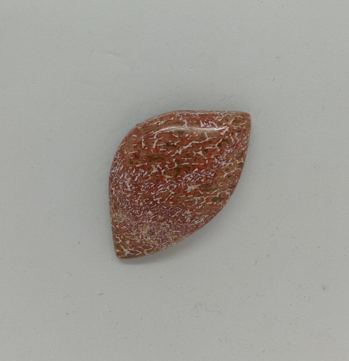Image of Fossilized Dinosaur Bone #21-465