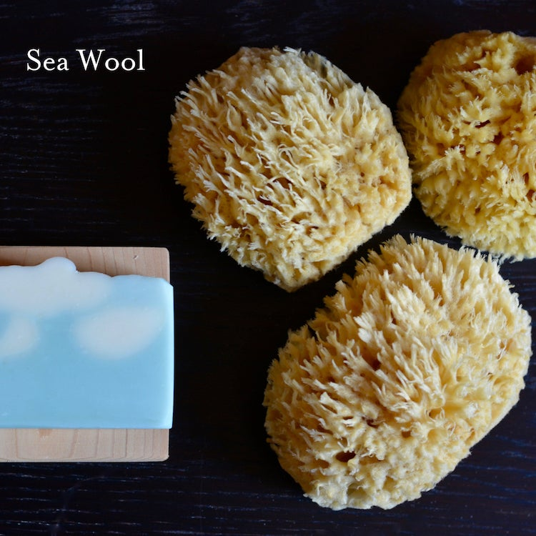 Image of Natural Sea Sponges
