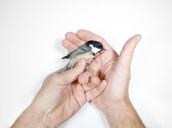 Image of Edition Birds