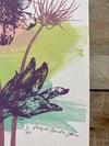 Julia Ogden Limited Edition Screen-print 'Pasque Flowers' 5/50